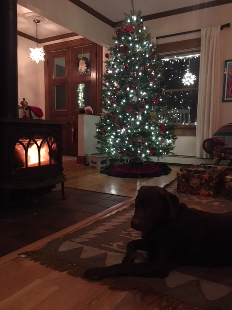 pretty tree fire and dog